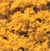 WT1353 Woodland Scenics: Coarse Turf - Fall Yellow (50 cu. in. Shaker)